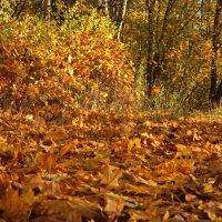 Осенняя листва лежала на земле :: Владимир Гилясев