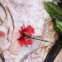 Цветение кустарника :: Aleks Ben Israel