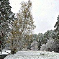 Первый снег в октябре в Подмосковье. :: Михаил Столяров