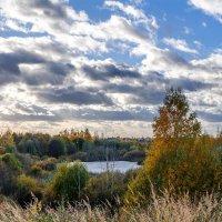 Озеро в кустах нетронутой природы :: Анатолий Клепешнёв