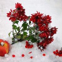 Мне хочется белого снега, морозного синего дня... :: Павлова Татьяна Павлова