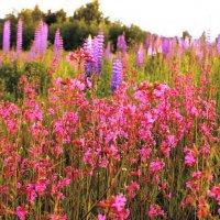 Полевые цветы :: Сергей Кочнев