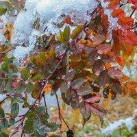 Октябрьский снег :: Виктор