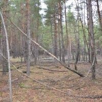 Я жадно слушал стон лесной... :: Наталья Мельникова