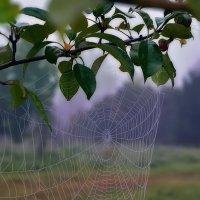 Висит на ветке дерева красивая картинка - Прозрачная фата - седая паутинка! :: Виктор Иванович