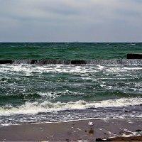 пляж и его обитатели, осень... :: Александр Корчемный