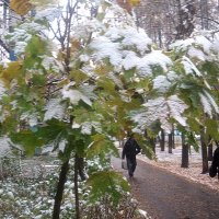 И вдруг выпал снег .. :: Елена Семигина