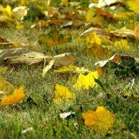Как осколки солнца стали листья клёнов... :: Татьяна Смоляниченко