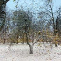 В Кремле. Первый снег. Великий Новгород. :: Татьяна