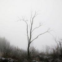 Одиночество :: Валерий Скобкарёв