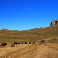 Осень на Гумбаши. Сгон скота с летних пастбищ. :: Vladimir 070549