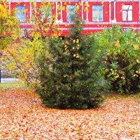 Осенняя листва :: наталия