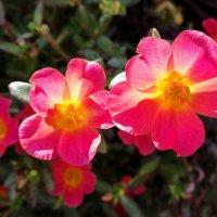 Цветы :: Александр Деревяшкин