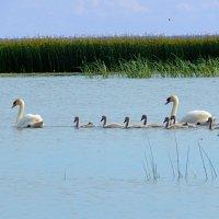 дружное семейство :: linnud