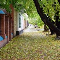 На ковре из желтых листьев ... :: Ксения