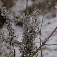 В ожидании зимы... :: Валерий Скобкарёв