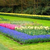 Весенний парк :: svetlana.voskresenskaia