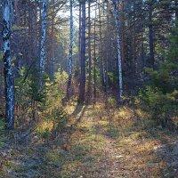 Освещённая тропинка в лесу :: Анатолий Иргл