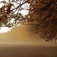 О тумане :: Alexander Andronik