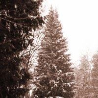 Осенний снег :: Aнна Зарубина