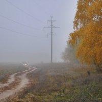 Оттенки осеннего утра :: Владимир Горбунов