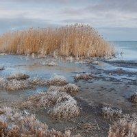 Холодное утро на озере :: Алина Шостик