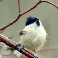 Птицы из парка 5 :: Сергей