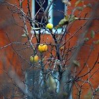 Осень за окном. :: владимир
