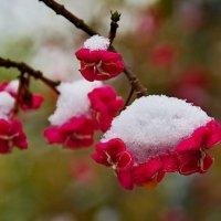 У нас зима!.. :: Юрий Кольцов