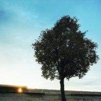 Дерево :: Dmitrii Гирев