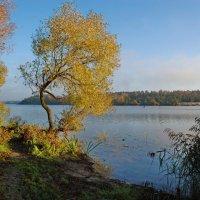 На берегу озера :: Валерий Толмачев