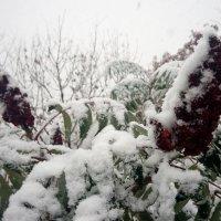 Ранняя зима :: Serg