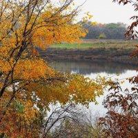 Догорают летом листья вяза... :: Лесо-Вед (Баранов)