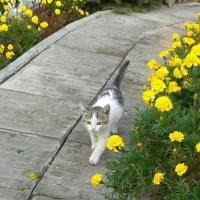 Котенок :: наталия