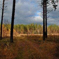 В осеннем лесу :: Валерий Толмачев