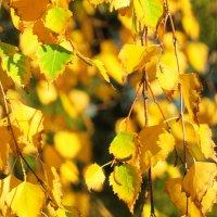 Березовые листики :: mAri