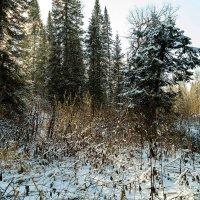 Снегопад в тайге :: Владимир Деньгуб