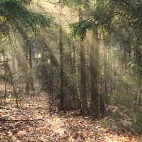 Осенью в лесу :: ninell nikitina