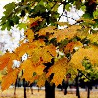 Листья желтые... :: Татьяна Пальчикова