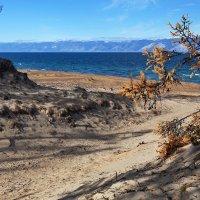 Песчаные дюны Ольхона :: Анатолий Иргл