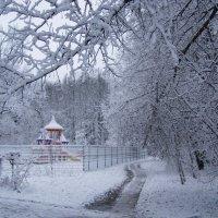 __Зима первый снег :: Анна Воробьева