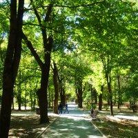 Кисловодск. Курортный парк :: татьяна