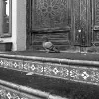 Найти голубя :: Ирина Хан