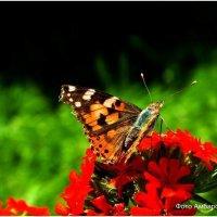 Бабочка на цветке :: Андрей