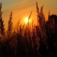 Sunrises :: Алина Давыдова