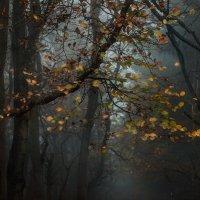 Туманный лес. :: Olga Ger