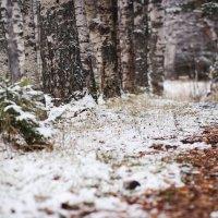 Падал первый снег :: Паша