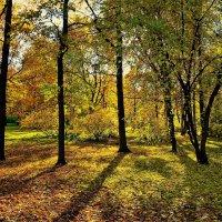 Золотой Парк... :: Sergey Gordoff