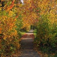 ход в осень :: оксана