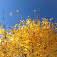 Осенний салют :: Swetlana V
